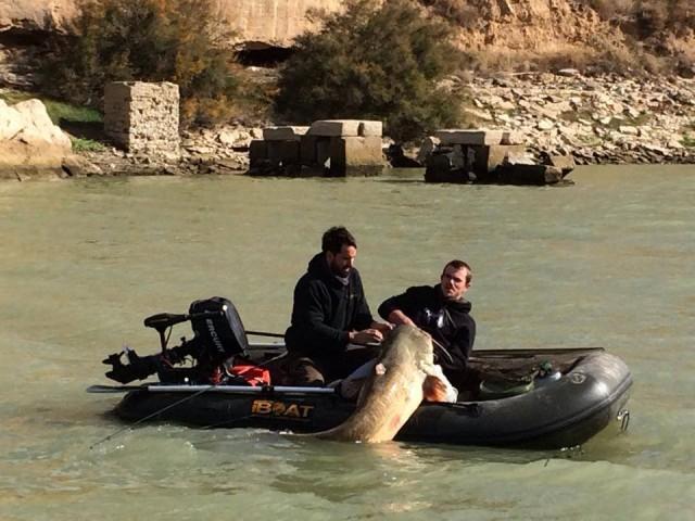 Catfish Ebro iBoat
