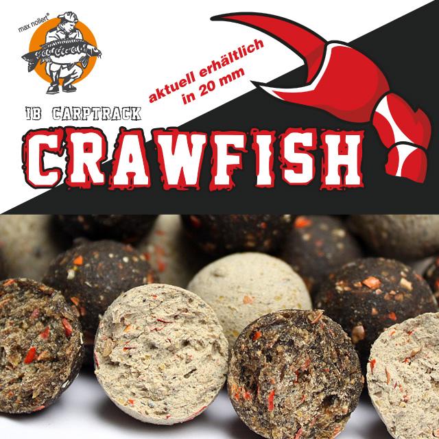 crawfish_boilie_starterneu