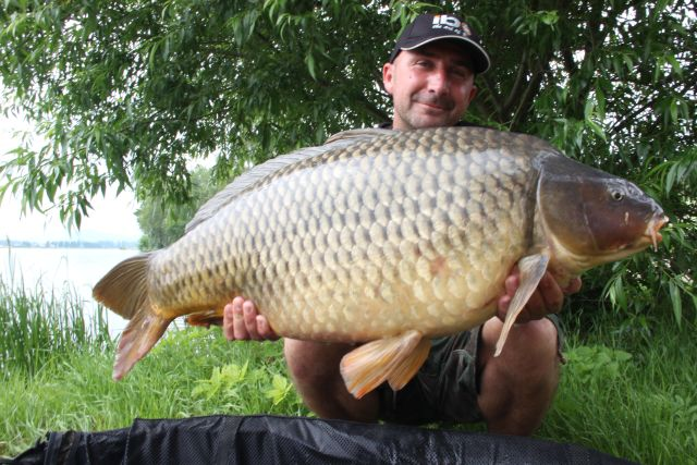 15.50 kg David Fort - Elite Strawberry - the same fish as previous