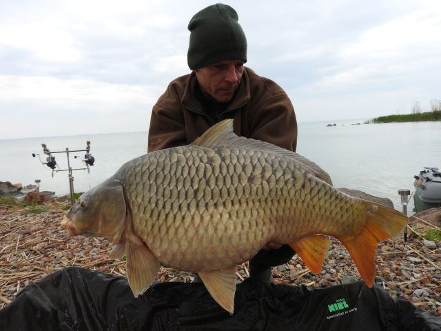 11 Not an average carp
