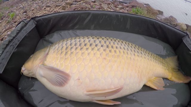 16 The water was cold, but that carp seems not too hungry
