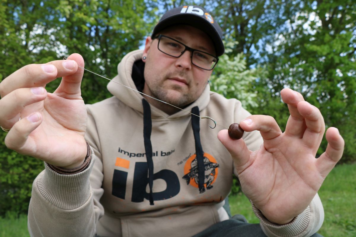 Mit IB Carptrack Liquid-Powder Paste ummantelte Tigernuss am Haar.