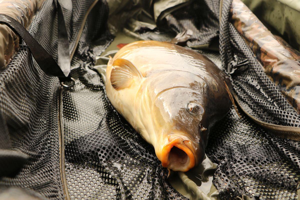 Perfekt, dem Fisch geht es blendend...