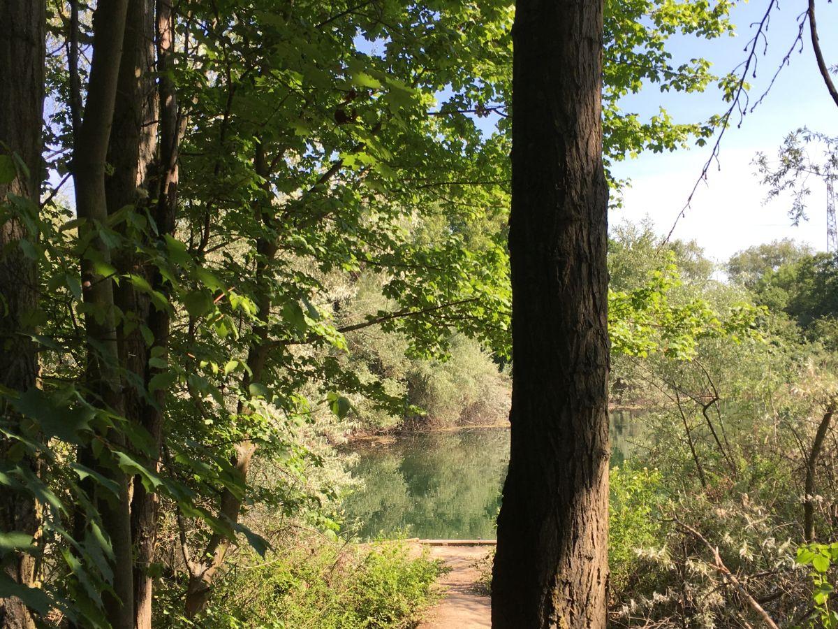 Perfekter Spot See Karpfen