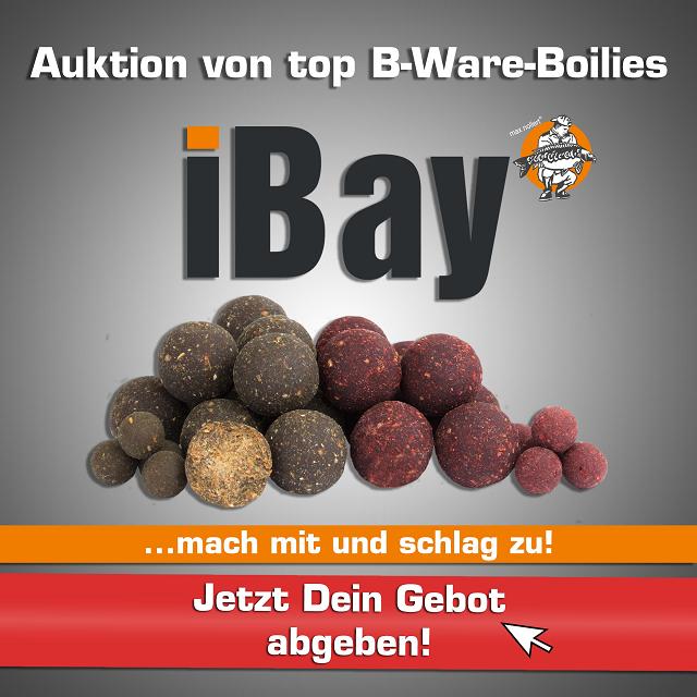 boilies-auktionen