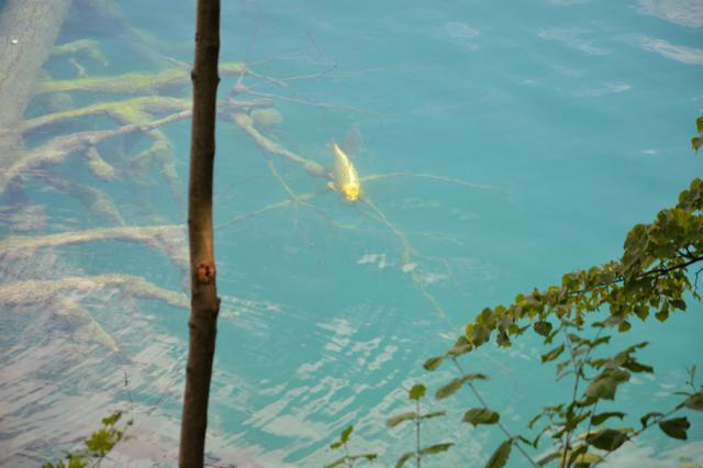 lake bled slovenia carp